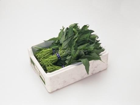 空心菜の写真素材 [FYI02354234]