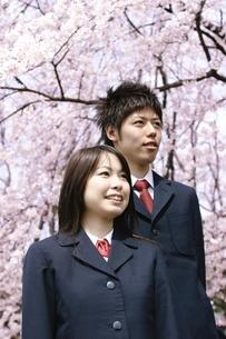 桜の木と制服を着た少年少女の写真素材 [FYI02354254]