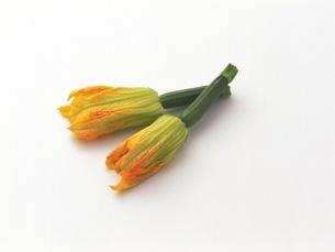花ズッキーニの写真素材 [FYI02354276]
