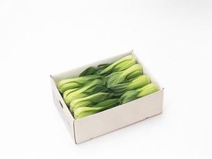 青梗菜の写真素材 [FYI02354291]