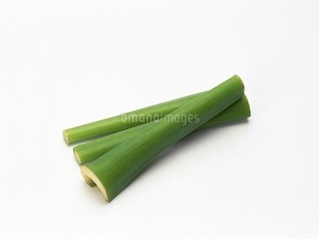 ハス芋の写真素材 [FYI02354360]
