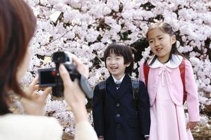 桜の木の前で記念撮影をする小学生男女の写真素材 [FYI02354373]