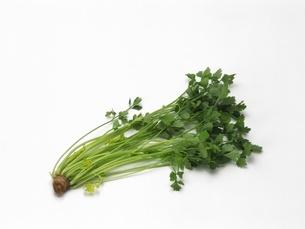 芹菜(中国セロリ)の写真素材 [FYI02354387]