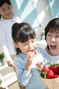 イチゴを食べる女の子の写真素材 [FYI02354389]