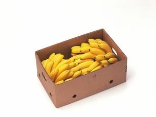 バナナの写真素材 [FYI02354423]