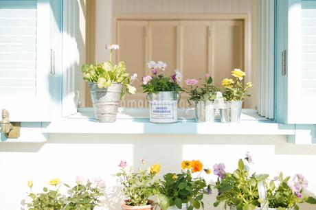 花いっぱいの窓辺の写真素材 [FYI02354495]