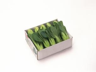ミニ青梗菜の写真素材 [FYI02354673]