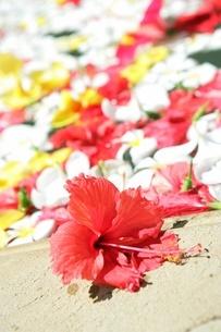 花を浮かべたスパの写真素材 [FYI02354714]