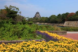 広島城址公園のマリーゴールドの花畑と天守閣の写真素材 [FYI02355260]
