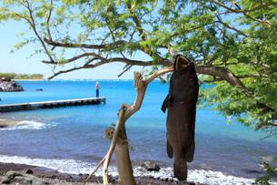 ハワイ島 プアコビーチの写真素材 [FYI02355290]