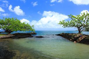ハワイ島ヒロのココナッツアイランドの写真素材 [FYI02355336]