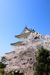 春の丸亀城の写真素材 [FYI02355373]