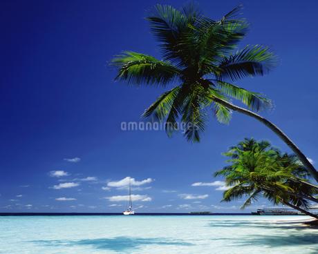 モルディブの海の写真素材 [FYI02355770]
