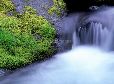 川俣川の流れの写真素材 [FYI02355822]