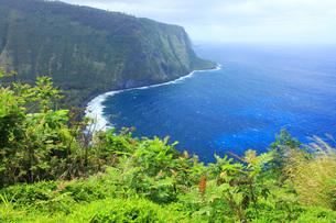 ハワイ島 ワイピオ渓谷の写真素材 [FYI02355832]