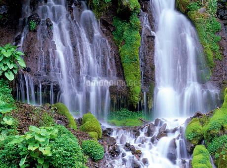 吐竜の滝の写真素材 [FYI02356049]