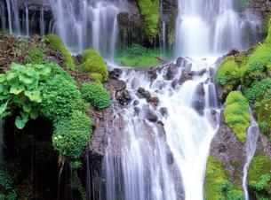 吐竜の滝の写真素材 [FYI02356110]