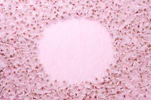 桜の花びらの写真素材 [FYI02356199]