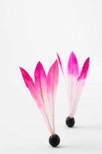 白バックの羽子板の羽根の写真素材 [FYI02356412]