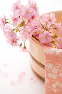 桜と桶の写真素材 [FYI02356436]