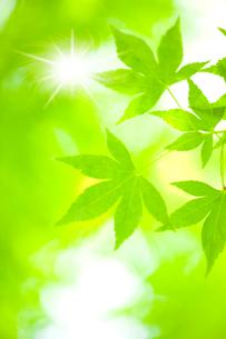 新緑と木漏れ日の写真素材 [FYI02356634]