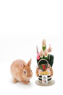 白バックのウサギと門松の写真素材 [FYI02356672]