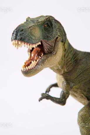 白バックの恐竜ティラノサウルスの写真素材 [FYI02356780]