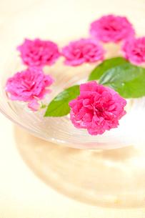 ガラスの花器と赤いバラの写真素材 [FYI02356820]