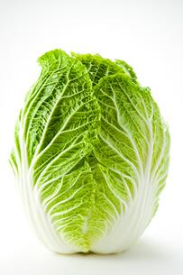 白バックの白菜の写真素材 [FYI02357024]
