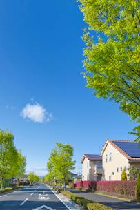 ソーラーパネルを設置した住宅街と新緑の街路樹の写真素材 [FYI02357082]