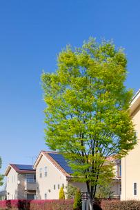 ソーラーパネルを設置した住宅と新緑の街路樹の写真素材 [FYI02357083]