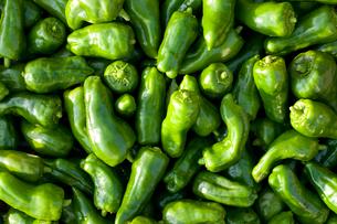 無農薬野菜のピーマンの写真素材 [FYI02357193]