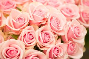 バラの花束の写真素材 [FYI02357196]