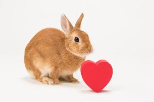 ウサギと赤いハートのギフトボックスの写真素材 [FYI02357225]