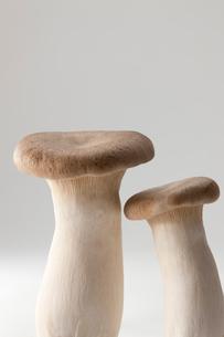 白バックのエレンギの写真素材 [FYI02357258]