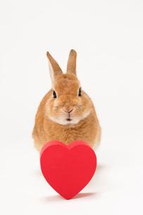ウサギと赤いハートのギフトボックスの写真素材 [FYI02357279]