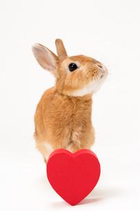 ウサギと赤いハートのギフトボックスの写真素材 [FYI02357307]