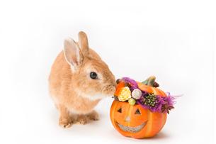 ウサギとハロウィンのかぼちゃの写真素材 [FYI02357371]