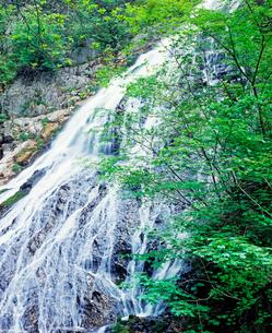 新緑の小倉の滝の写真素材 [FYI02357373]