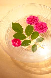 ガラスの花器と赤いバラの写真素材 [FYI02357378]