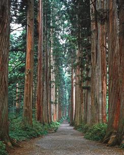 杉並木の小道 戸隠神社の写真素材 [FYI02357403]