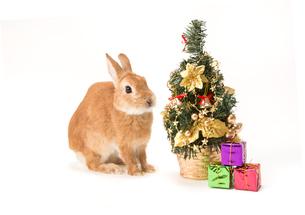 ウサギとクリスマスツリーの写真素材 [FYI02357427]