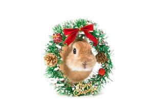 ウサギとクリスマスリースの写真素材 [FYI02357516]