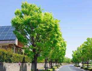 ソーラーパネルのある住宅街と新緑の街路樹の写真素材 [FYI02357623]
