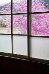 木造校舎の木製の窓とトウゴクミツバツツジの写真素材 [FYI02357675]