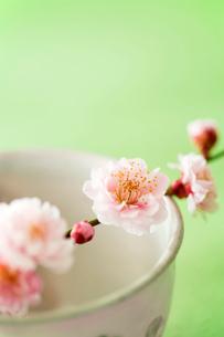 湯飲み茶碗と梅の花の写真素材 [FYI02357780]