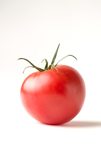 白バックの完熟トマトの写真素材 [FYI02357784]