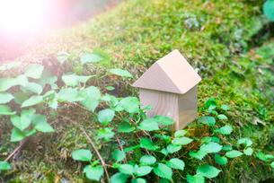 苔とミニチュアの木の家の写真素材 [FYI02358048]