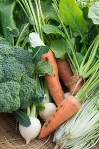 野菜の集合(ニンジン,カブ,ブロッコリー,水菜,ほうれん草)の写真素材 [FYI02358083]