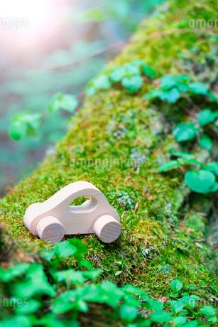 苔とミニチュアの木の車の写真素材 [FYI02358104]